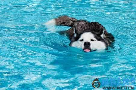 小狗和青蛙游泳比赛,为什么狗狗赢了?